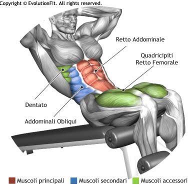 Chair Sit Ups Muscles by Mappa Muscoli Addominali Situp Panca Bassa Jpg 390 215 380