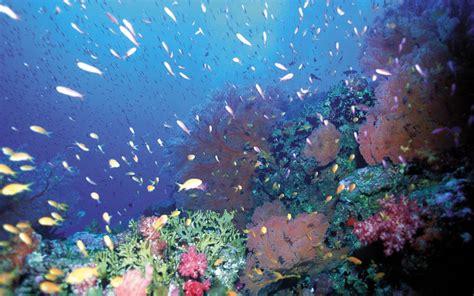 deep blue sea images pixelstalknet