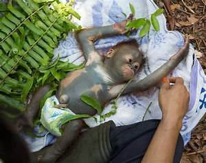 Back to Borneo     Long Beach Animal Hospital