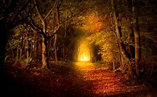 Image result for Royalty Free Picture of Lamp On Dark Path