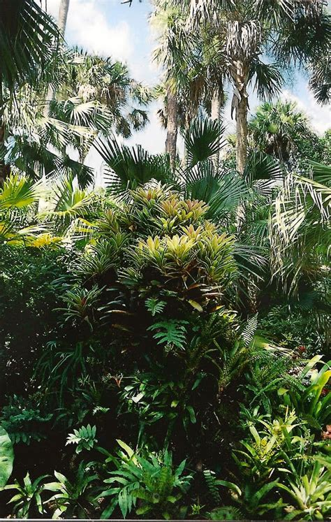 mckee botanical gardens the rainforest garden mckee botanical gardens