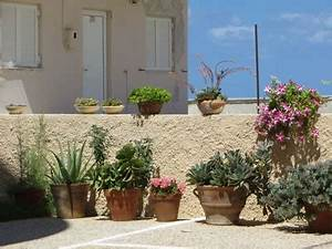 Winterharte Bäumchen Für Balkon : mediterrane pflanzen f r terrasse und balkon ~ Buech-reservation.com Haus und Dekorationen