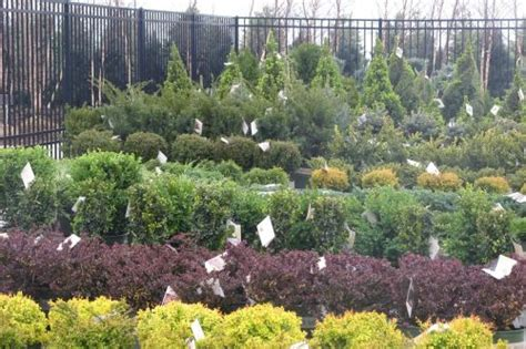 types of shrubs types of shrubs www pixshark com images galleries with a bite