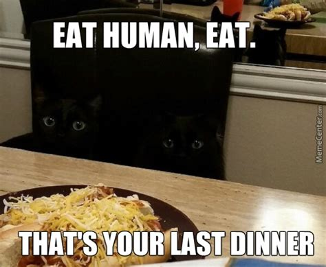 Humans Meme - my dear human cat memes