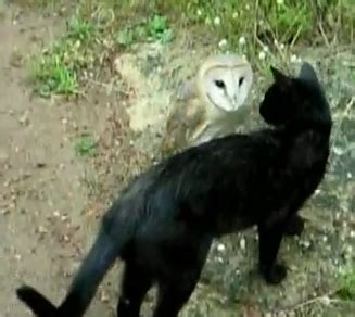 katze spielt mit eule