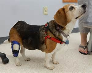 ACL Knee Brace for Small Dogs