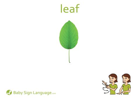 l words and pictures printable cards leaf legs leaf