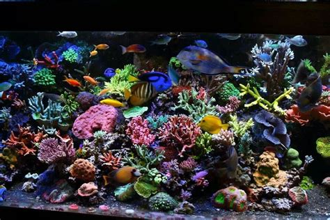 colorful aquarium fish colorful reef tank gorgeous i saltwater tanks