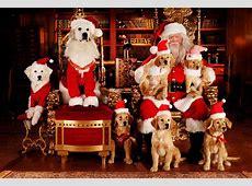 Frohe Weihnachten sagenhafte Fotos von Hunden