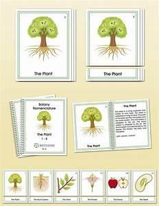 Botany Early Childhood Nomenclature