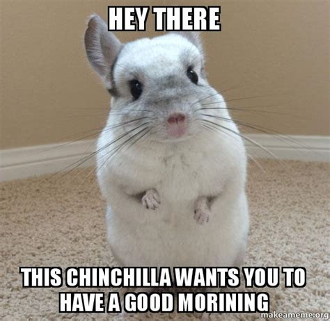 Hey You There Meme - hey there this chinchilla wants you to have a good morining make a meme