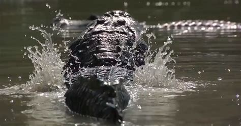 Which Everglades Airboat Tour Is The Best by Everglades Tour Everglades Airboat Ride