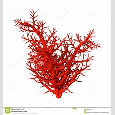 3d Illustration Red Coral On White Stock Illustration  Illustration Of Isolated, Tropical 69924312