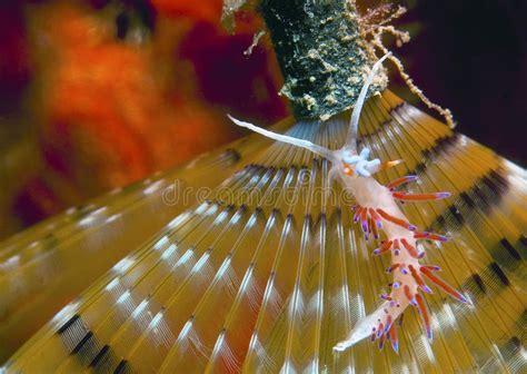 invertebrate grouper wildlife preview