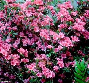 p poisonous plants