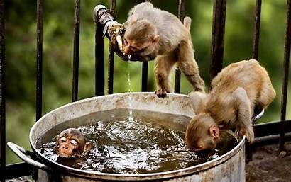 Funny Monkeys Silly Bucket Wallpapers Monkey Desktop