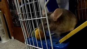 Chinchilla Cage Set-Up - YouTube