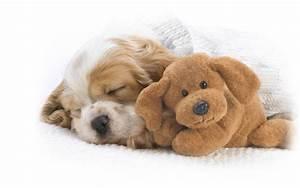 Puppy Sleeping wallpaper - 991304