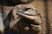 Giant anteaters kill hunters in Brazil - is habitat loss ...