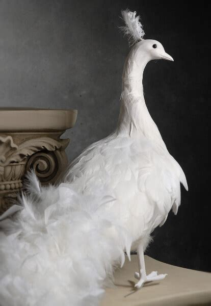 giant white artificial peacock  curly feathers