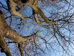 Winter, Tree, Branches, From, Below, Picture