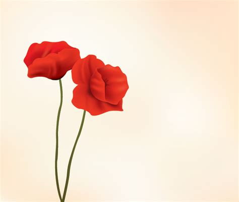 poppy pictures free use two beautiful free poppy flower vector illustration feel free to download this red flower