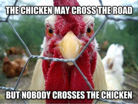 Funny Chicken Memes - 30 hilarious and funny pictures of chickens tail and fur