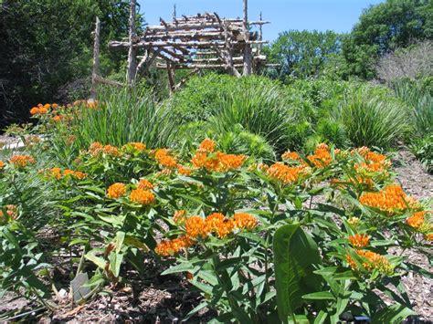 plants gardening how to design a native plant garden dyck arboretum