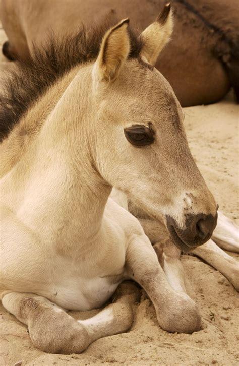 paarden plaatjes paardenzijndebeste