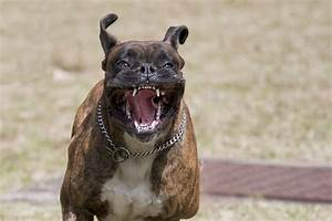 What To Do About Aggression In Dogs