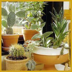 Pflanzen Für Wohnzimmer : pin von timea auf pflanzen f r zu hause pinterest zimmerpflanzen pflanzen und wohnzimmer ~ Markanthonyermac.com Haus und Dekorationen