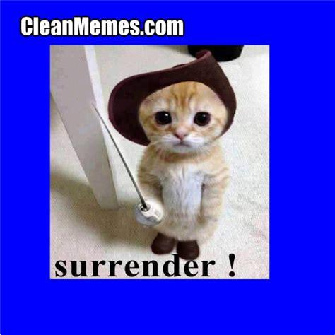 Grumpy Cat Meme Clean - clean cat memes image memes at relatably com