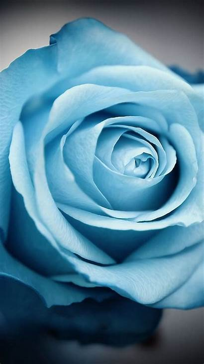 Iphone Backgrounds Flower Flowers Wallpapers Rose Serene
