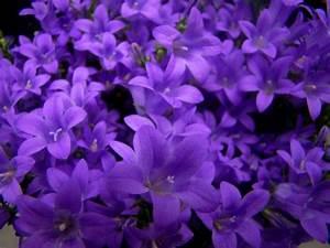 Violet Flowers by kasia240 on DeviantArt