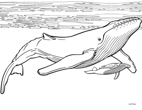 humpback whale project   images  final