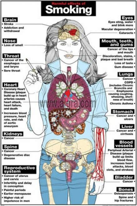 smoking effects harmful body poster drug posters organs affected alcohol brain human marijuana health addiction laminated term long lung display