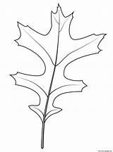 Oak Leaf Coloring Printable Prints sketch template