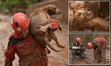 firefighter rescues dog trapped  mud  brazil mining