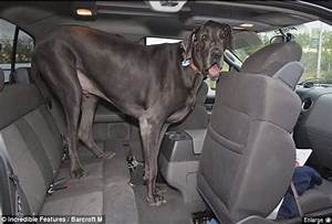 The Laughing Pet: Guinness World Record for tallest living dog