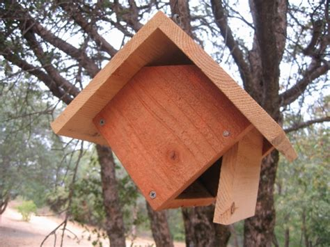 birdhouse nest box plans bird species birders report
