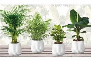 Plantes Exotiques D Intérieur : set de 4 plantes d int rieur exotiques outspot ~ Melissatoandfro.com Idées de Décoration