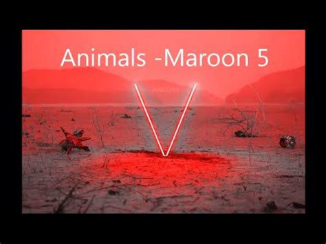 animals maroon  lyrical requests youtube