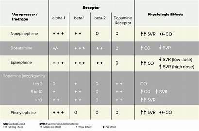 Vasopressor Vasopressors Inotropes Medications Chart Inotrope Norepinephrine