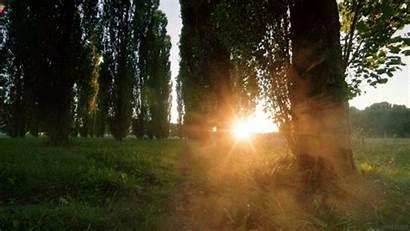 Living Fog Sunrise Stills Trees Nature Forest