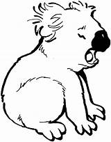 Koala Coloring Pages Bear Printable Colouring sketch template