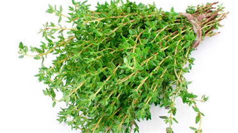 romarin cuisine le thym une herbe à l odeur de provence