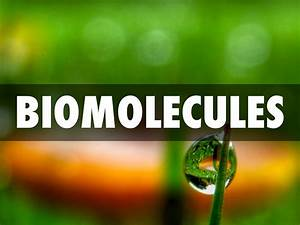 Elements Of Nucleic Acids Biomolecules By Mitchell Moreno