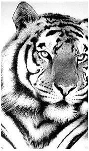 خلفيات النمر الأبيض روعة , اجمل صور النمر متحركة , HD Snow ...
