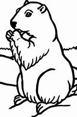 Groundhog Coloring Pages Woodchuck Printable Sheets Hog Ground Animal Getdrawings Rocks sketch template