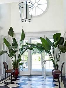 Große Zimmerpflanzen Pflegeleicht : die 25 besten ideen zu gro e zimmerpflanzen auf pinterest ~ Lizthompson.info Haus und Dekorationen